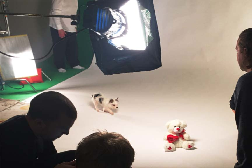 animal commercial film shoot